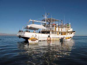Tony Reyes Fishing Tours