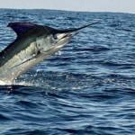 San Felipe Fishing Charters in the Sea of Cortez Baja California