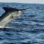 SSan Felipe Fishing